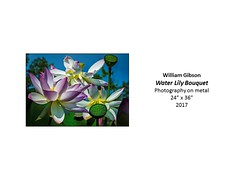 """Water Lily Bouquet • <a style=""""font-size:0.8em;"""" href=""""https://www.flickr.com/photos/124378531@N04/37106283913/"""" target=""""_blank"""">View on Flickr</a>"""