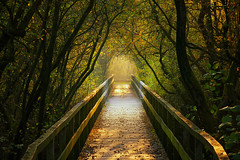 Light at the end of the Tunnel (Little♥Krawler) Tags: nature natur germany deutschland autumn herbst light licht sun sonne tree baum