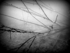 Tauchen Copacabana 2017 (Martin Wippel) Tags: tauchen diving dive martin wippel tauchbasis divers kalsdorf copacabana tsz pazifik tauchschule tauchturm seiersberg blue dolphin ms st wolfgang msstwolfgang cessna bluedolphin cocacolabear welse hechte zander süsswasserkrebse