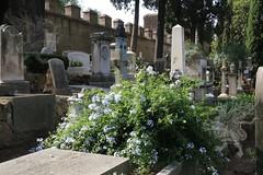 CimiteroAcattolico_34
