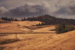 Solitude (charhedman) Tags: thepalouse fieldsofgold solitude isolation grooves clouds easternwashington