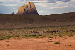 Feral Horses (soggymuppet62) Tags: horses running shiprock newmexico wild sky landscape feralhorse wildhorse canon 1200d t5