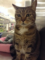 Pebbles - 6 year old spayed female