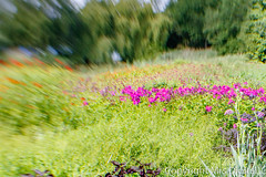 Mrs Digital Pensthorpe _MG_0818-Edit PF.jpg (Mr and Mrs Digital) Tags: garden summer 2017 flower flowersplants norfolk sancturay lensbaby pensthorpe alittlebeauty coth
