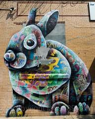 Rabbit Mural, 360 Troutman Street, Bushwick, Brooklyn, New York City (jag9889) Tags: 2017 20170615 brooklyn bushwick graffiti kingscounty mural ny nyc newyork newyorkcity outdoor painting rabbit streetart tagging troutmanstreet usa unitedstates unitedstatesofamerica wall jag9889 us