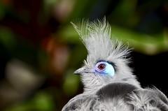 Unidentified  Zoo Bird (I'magrandma) Tags: atlanta zoo georgia bird