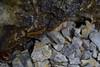 A Myriapod (Ruth Joy Sta Maria) Tags: myriapod insect worm
