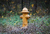 Lonely fire hydrant - Anderson S.C. (DT's Photo Site - Anderson S.C.) Tags: canon 6d 24105mml lens upstate andersonsc south carolina fire hydrant plug water field yellow bokeh blur colorful america usa country roads
