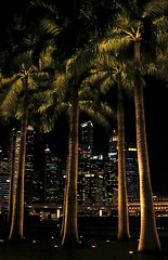 Palmeras (vic_206) Tags: singapur night noche nocturna luces lights