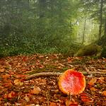 impressions of autumn thumbnail
