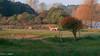 20171014-DSC_0617 (M van Oosterhout) Tags: amsterdamse waterleiding duine natuur nature flora fauna landschap landscape dutch holland amsterdam nederland netherlands animals
