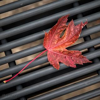 Leaf and Bars