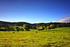 In Pastures Green (Kevin_Jeffries) Tags: newzealand kevinjeffries nikon d800 flickr idyllic green landscape canterbury rural farmland spring 50mmf18 blue sheep pasture