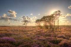 Once upon a time... (blavandmaster) Tags: august himlen hede landskabet landscape 24105 landschaft ciel solnedgang jütland danmark denemarken summer countryside pijnboom blavand heather dänemark danish zonsondergang perfect 2017 kleuren heidekraut sky nuages tree denmark sommer sonnenuntergang lys colours 39000000 hemel garrigue himmel heide christiankortum interesting lumière blåvand jylland clouds coucherdesoleil pine skyer pinède erica lyng wolken eos6d paysage canon