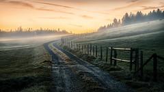 Morgenspaziergang (https://500px.com/klaussteinert72) Tags: herbst sonnenaufgang morgen weg dunst sunrise morning way autumn mist fog