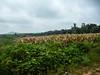 corny (steve happ) Tags: coorg india karnataka kodagu madikeri