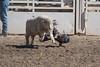 GY8A4456.jpg (BP3811) Tags: 8seconds 2017 allen arizona bareback barrel bell belt bit boots boy breakaway bronc buck buckle bull bulldogger bustin busting calf chase clown corral cow cowboys cowgirl days fall gate hat hazer header healer helmet horns horse jump kids lariat leap mutton october queen racing reins rex riders riding rodeo rope roping run saddle sheep spurs steer team teamwork tie twist wilcox wrestling