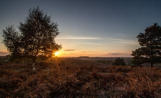 Rockford common sunset