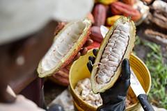 NP_Cacao_Guaviare6