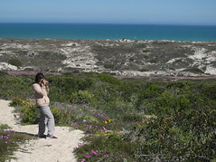 P9160111. West Coast National Park Flowers (Joanna P Dale) Tags: westcoastnationalpark flowers southafrica omdem1 mk1 olympus 35mmzuiko 35mmmacro