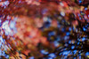 the heaven's door ... (mariola aga) Tags: autumn tree sky lensbaby composerprosweet35 blur bokeh distortion abstract art