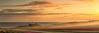 Tulips in the Mist (Ray Jennings AU) Tags: tulips sunrise panorama nikond810 nikon2470 fields tasmania wynyardtasmania