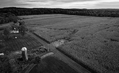 autumn farm scene (sephrocker) Tags: dji drone p4 farm fall autumn dark gloomy corn field aerial rural country blackandwhite monochromatic