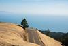 Trojan Point (Studio281Photos) Tags: california mttamalpais mttam trojanpoint bayarea mountain tree road grass gold ocean bay nature landscape travel vacation nikon nikond810 2470mm