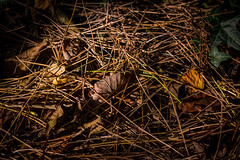 Beneath your feet (Jim Hughes Photography) Tags: colour autumn autumnal foliage leaves walks wiltshire calm peace solitude brown green crisp countryside country forrest floor needles crunchy beauty views macro