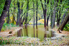Milton State Park (charlie_guttendorf) Tags: guttendorf landscape milton miltonpa miltonstatepark nikon nikond7000 susquehannariver landscapephotography outdoorphotography outdoors outside susquehanna