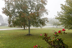 Autumn rain shower  - Anderson S.C. (DT's Photo Site - Anderson S.C.) Tags: canon 6d 1740mml lens upstate andersonsc south carolina rain rose shower yard lawn storm clouds southern america usa scenic stormy