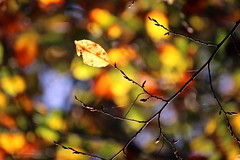flickr friday - OrangeDecorations - light fall by [L]aurent -
