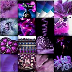 Enjoying Blue and Purple (haberlea) Tags: fdsflickrtoys