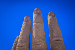 A close look at the intricate detail on the fingers of the hand of the desert.
