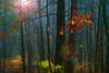 Automne dans le Parc ... ( P-A) Tags: parcdelagatineau découvrezetprotégez nature forêt arbres feuilles automne 2017 beauté décors contrastes nikond800 balade pluie nuages éclaircie sentier visiteurs baladeurs photos simpa© flickrelitegroup vivelevert magicmoments