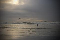Insel Rømø (hudsonleipzig80) Tags: umwelt umweltschutz rømø dansk denmark denemark insel nordsee northsee wattenmeer watt natur nature meer sunset eveningsun canon canoneos1200d eos1200d 1200d outdoor küste strand ozean wasser