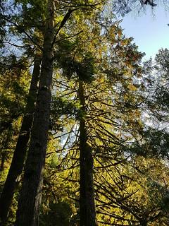 Trees against blue sky