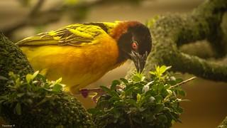 Bird -(3811)