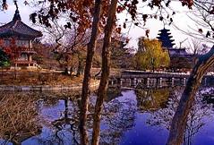 Seoul: Gyeongbokgung Palace Garden (gerard eder) Tags: world travel reise viajes asia eastasia korea southkorea seoul gyeongbokgungpalace autumn herbst otoño reflections spiegelung temple templos tempel pagoda
