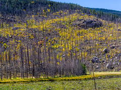 Life anew (lynnwheeler36) Tags: landscape forestfire rmnp