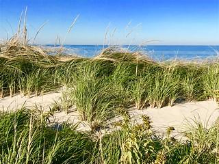 Sandy Neck beach Cape Cod