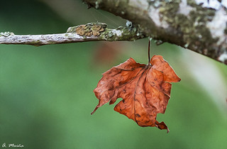 The consequences of autumn. Las consecuencias del otoño