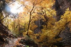 Maple canyon (Jean-Michel Villanove) Tags: maple canyon utah escalade climbing congloméra poudingue national park maplecanyon grimpe mountpleasant nationalparks arches automne