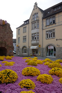 autumnal flowers in the city of Lahr (1)