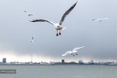 The island of Texel (janwesselbakker) Tags: texel eiland vuurtoren dieren natuur sunset lighthouse