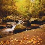 An autumn thumbnail