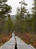 Pitkospuut (mustohe) Tags: 2017 hettapallas vaellus hiking lappi lapland syksy autumn canong12 suomi finland kansallispuisto nationalpark