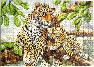 Leopard Love (Howard Robinson)
