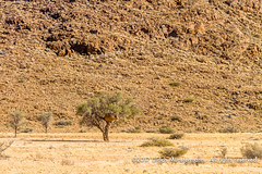 Along the C19 towards Solitaire, Namibia (Ulrich Münstermann) Tags: africa afrika c19 hardapregion khomasregion landschaft namibia solitaire wüste desert landscape landschap mountain tree nearsolitaire