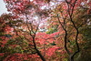 IMG_3049-HDR.jpg (tybach) Tags: canon750d arboretum westonbirt